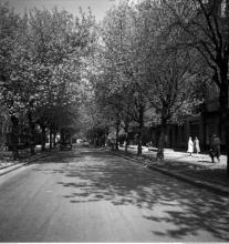 Narbutta, 1955