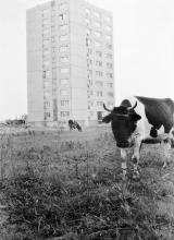 Sardyńska, ok. 1973