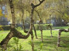 Sielecka, drzewa, 2008